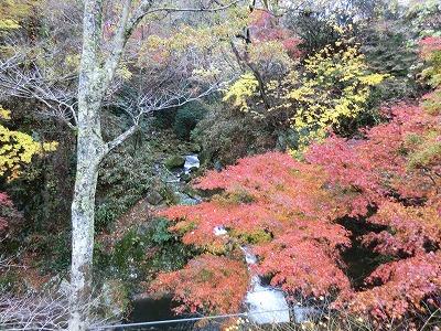 3062紅葉の下の滝.jpg