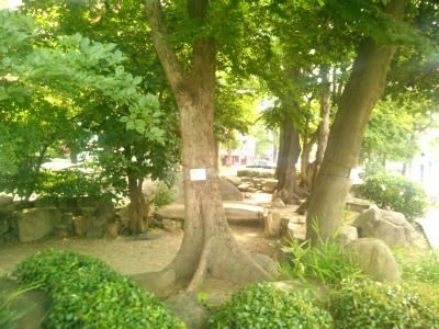 国泰寺庭園2.jpg
